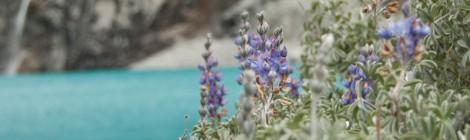 flores en laguna 69