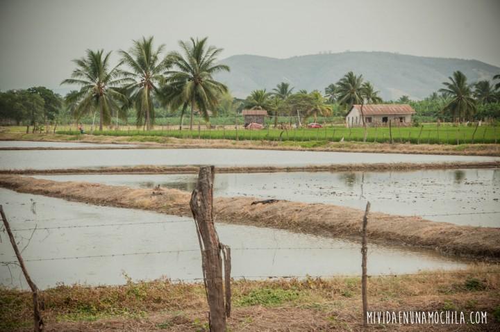 arrozales ecuador