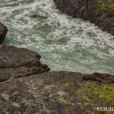 lobo marino isla de la plata