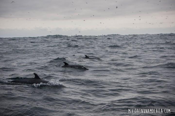 delfines isla de la plata