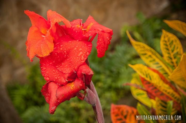 flores el pital