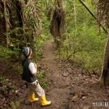 áerboles parque nacional machalilla