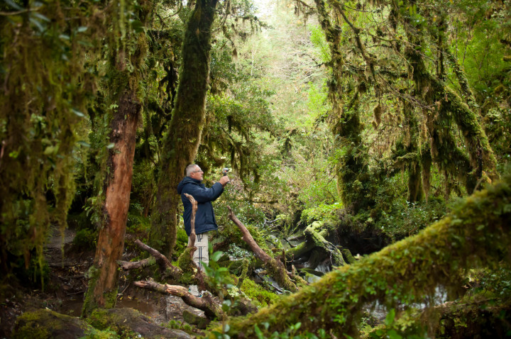 bosque encantado carretera austral