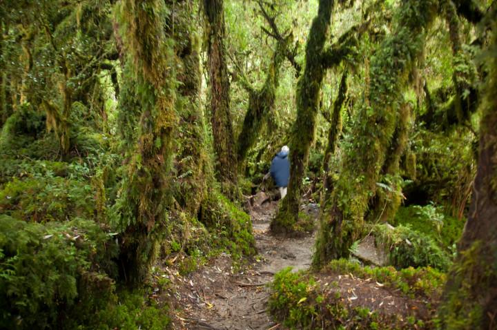 bosque encantado parque quelat chile