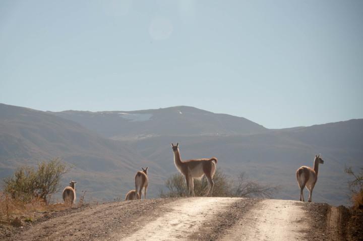 animales carretera austral chile