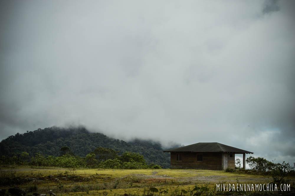 guacamayo ecuador reserva nacional antisana