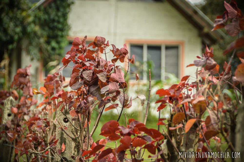 hojas rojas ecuador