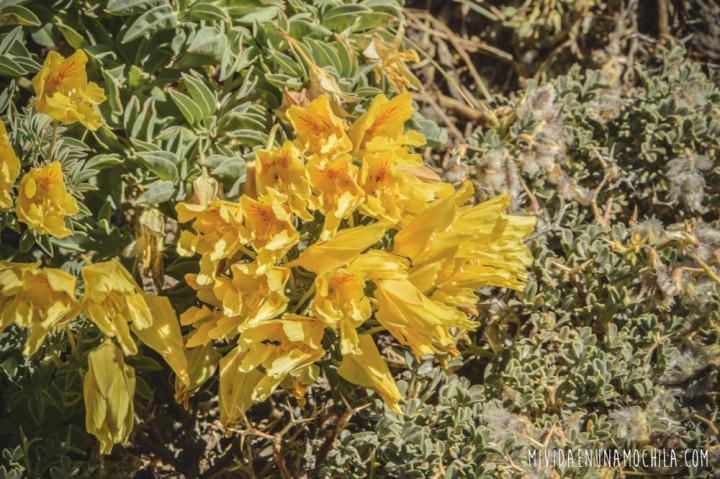 flores andinas