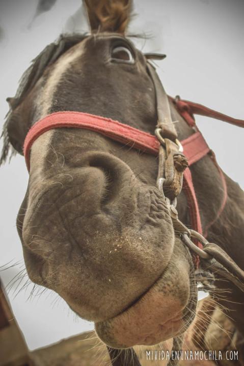 caballo gracioso