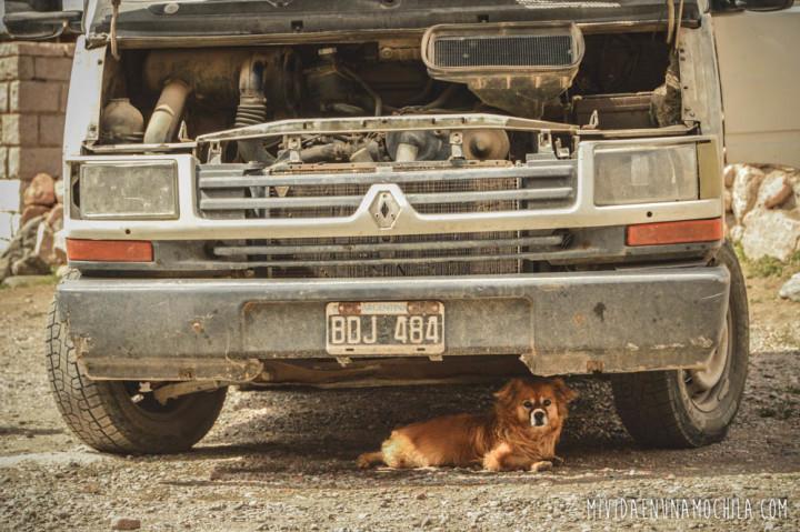 perro debajo del auto