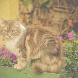 gato ayora en bici ecuador (5)