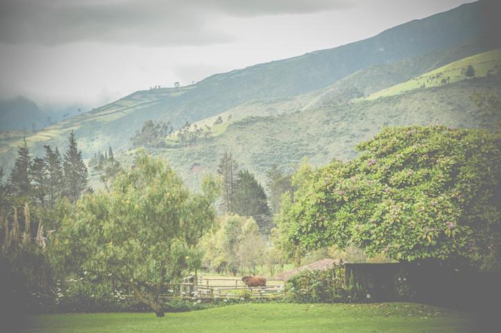 hacienda zuleta ecuador (18)