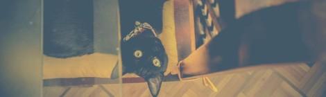 ibarra ecuador gato nuevo viajar lento