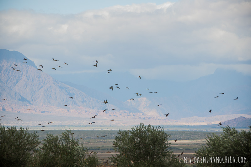 aves volando bodega viñedos