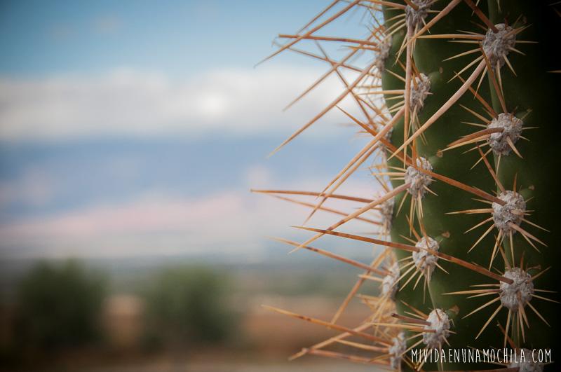 cactus noa