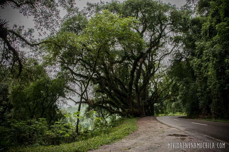 camino de yungas salta tucuman
