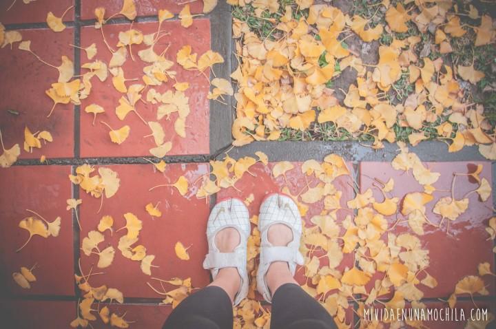 ciclos hojas naturaleza