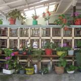 flores casa colombia